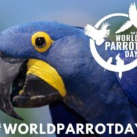 World Parrot Day 2021 Date, History, Significance, Origin, Facts, images, Wallpapers, pics and all you need to know about.