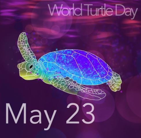 World Turtle Day 2021 ( World Tortoise Day 2021 ) - History, Date, Theme, Origin, Significance, Purpose Celebration, Facts, Wishes, Quotes, Messages, Sms, Status, Whatsapp Status, Facebook Status, Images, Posters, Banners, Wallpapers, Insta Stories, Cards, Greetings, Drawing, Pics