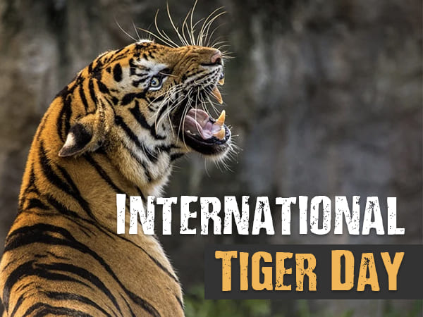 International Tiger Day 2021: Date, Theme, History, Importance, Significance, Facts,  Ways to save tigers, Tigers Species, Extinct Tiger Species, Declining Reasons Of Tigers, Images, WWF, Banners, Drawings, Cards, Wallpapers, Slogans, Quotes, Posters, Pics