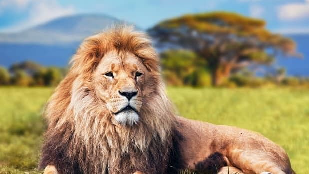 World Lion Day 2021: Wishes, Quotes, Messages, Images, Wallpapers, Banners, Cards, Drawings, Posters, Pictures, Slogans, Status, Whatsapp And Facebook Status